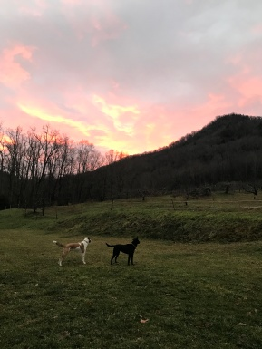 12.21.17 Bruno and Luna on the sunrise date